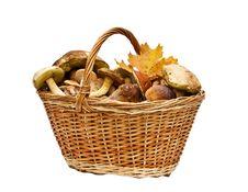 Free Basket With Mushrooms Royalty Free Stock Image - 16276356