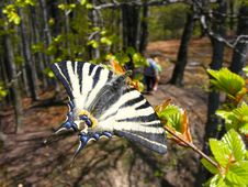 Free Butterfly In The Forest. Royalty Free Stock Photos - 16279088