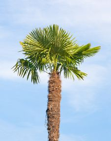 Free Palm Tree On Blue Sky Background Stock Photos - 16279273