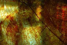 Free Tree Telling Time Stock Photos - 162733253