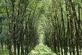 Free Tunnel Tree Stock Image - 16288441