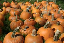 Free Pumpkins At Farm For Sale Stock Image - 16280141