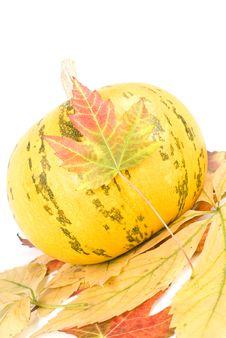 Free Pumpkin Stock Photos - 16280493
