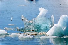 Jokulsarlon Iceberg With Bird Royalty Free Stock Photo