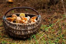 Free Basket With Mushrooms Stock Photo - 16282450
