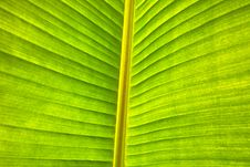 Free Green Leaf Macro Stock Image - 16282831