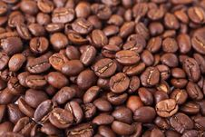 Free Coffee Beans Royalty Free Stock Images - 16282929