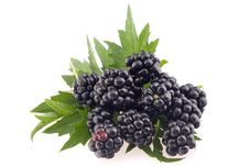 Free Blackberries With Leaves. Stock Photography - 16282932