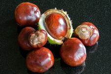 Free Conkers Stock Images - 16283024