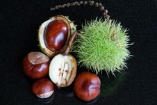 Chestnuts & Conkers