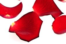 Free Rose Petals, Isolated Stock Photos - 16283713