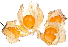 Free Physalis Stock Images - 16284054
