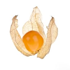 Free Physalis Royalty Free Stock Photo - 16284125