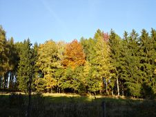 Free Coloured Forest-2 Stock Image - 16284291