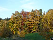 Free Deciduous Trees In Autumn Royalty Free Stock Photo - 16284335