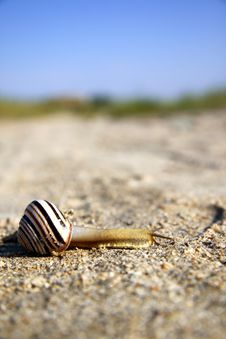 Free Striped Snail Crossing A Sand Road Stock Photography - 16285802