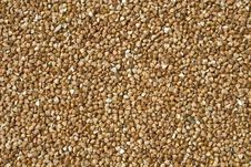 Buckwheat Texture Royalty Free Stock Photography
