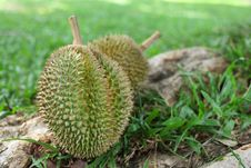 Free Durians Stock Photos - 16287753