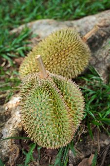 Free Durians Royalty Free Stock Photography - 16287767