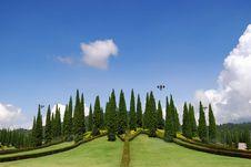 Free Pine Line Royalty Free Stock Photo - 16287795
