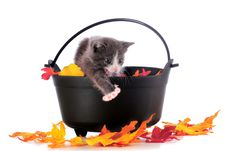Free Howling Halloween Kitty Stock Photos - 16287803
