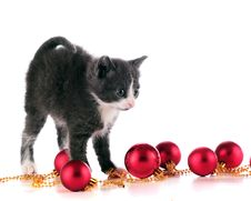 Free Christmas Kitty Stock Images - 16287804