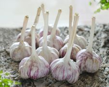 Free Garlic Stock Images - 16288284
