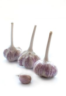 Free Garlic Stock Photo - 16288290