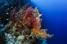 Free Orange And Pink Soft Coral Stock Photos - 16288563