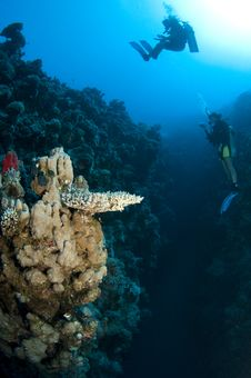 Scuba Divers On Coral Reef Royalty Free Stock Image