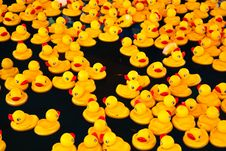 Free Yellow Ducks In A Pool Stock Image - 16288641