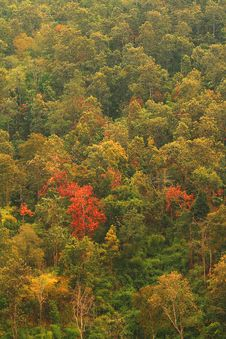 Free Forestry In Many Colors Royalty Free Stock Image - 16289136