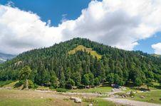 Free In Lake Ritsa Vicinities. Abkhazia. Stock Images - 16289324