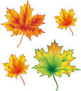 Free A Set Of Maple Leaves Royalty Free Stock Image - 16291876