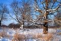 Free Oak Wood Stock Photo - 16293050