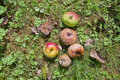 Free Rotten Apples On The Ground Stock Photography - 16297372
