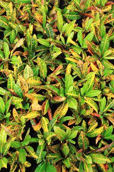 Free Ornamental Green Royalty Free Stock Image - 16290056