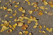 Free Dry Leaves On Sand Footway Royalty Free Stock Photography - 16290227