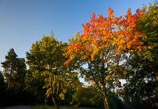 Free Autumn Trees In Morning Light Stock Photos - 16290463