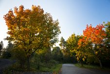 Free Autumn Trees In Morning Light Stock Photos - 16290493