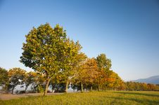 Autumn Trees In Morning Light Royalty Free Stock Photo