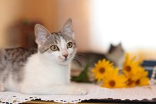 Free Cat, Mirror And Flowers Royalty Free Stock Photo - 16291355