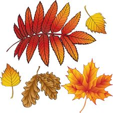 Free A Set Of Autumn Leaves Royalty Free Stock Photo - 16291865