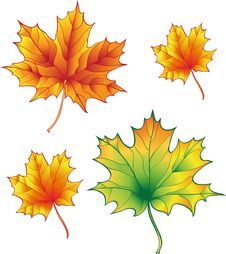 A Set Of Maple Leaves Royalty Free Stock Image