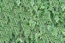 Free Green Vegetative Background. Royalty Free Stock Image - 16292686