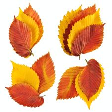 Free Autumn Leaves Royalty Free Stock Image - 16293296
