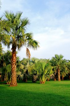 Free Palm Trees In Tropical Garden Stock Photo - 16295220
