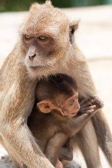 Monkey With Baby Stock Photography