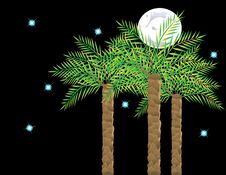 Palms On Background Of The Moon And Starry Sky Royalty Free Stock Image