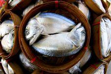 Free Fresh Tuna Stock Photography - 16296852